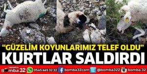 YİNE KURTLAR SALDIRDI